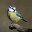 Bird box - Wicklow, Ireland