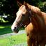 Jackie's Foal Watch