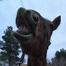 Miracle Horse Rescue & Sanctuary