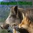 Mangolink Wildcam