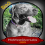 MidWest Silver Labradors