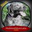 Pup close-ups broadcast June 4th