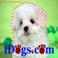 iDogs.com