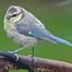 Boro Garden UK bird feeder cam