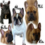 MRVEC French Bulldogs