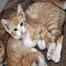 SPCA of Texas Kitten Corner