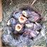 Birdbox Live