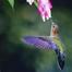 Birdie cam 2100