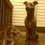 Dog Monitor - Ava and Laila