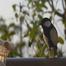 ベランダで野鳥観察