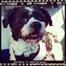 Pongo's Live Cam