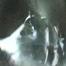 Haunted: Stalking The Nights Shadows