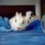 Charlie & Bella Bunny