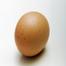 Chick Hatchery