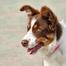 Freelin Dreams puppy cam