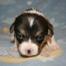 Puppies 7-16-13
