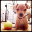 Eames puppy cam