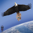 Crown Eagles Organization
