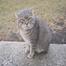 BIG BEN THE JUNKYARD CAT