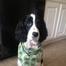 Leia Puppy Cam