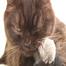 Kittens Amy