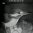 Hampshire Wildlife Trust Kingfisher nest, Winnall