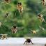 Honey Bees - Landing Zone