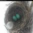 Robin's Nest Cam - New Jersey