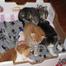 KittenQuints