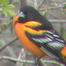 Tims Bird Feeder