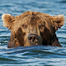Katmai National Park, Alaska - River Watch
