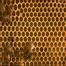 Essex Bee Hive
