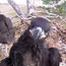 Southwest Florida Eagle Cam (Camera #2)
