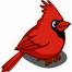cardinalsustream