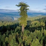 Tree Top Television Network