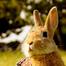 ミカパー! (うさぎ/ウサギ/Rabbit/Bunny)