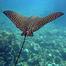 Grand Cayman Reef Cam: Teens4Oceans
