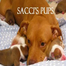 Sacci Pups