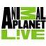 APL!VE Labor Live Highlights