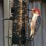 Tippy's Bird Feeder Cam