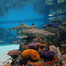 Blacktip Reef Live Cam - National Aquarium