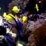 Pacific Coral Reef Live Cam - National Aquarium