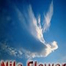 nile flower shows