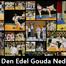 Ju Jitsu Den Edel Gouda NL Live