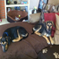 Abby & Buddy Puppy Cam