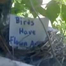 Duke University baby robins