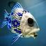 Fish Zen