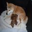 Puppy Cam - Oct 8