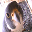 UdeM Falcons / Faucons de l'UdeM