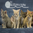 TheKittenCrew